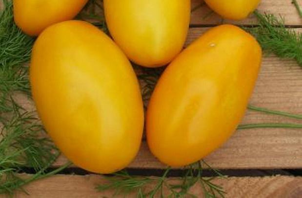 Сорт томата: Буян желтый