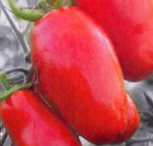 Сорт томата: Дамские пальчики