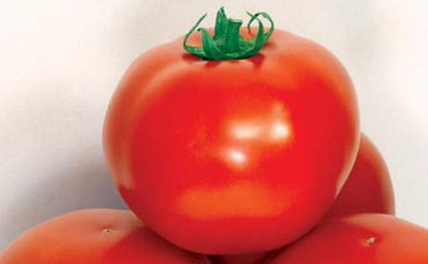 Сорт томата: Дар заволжья