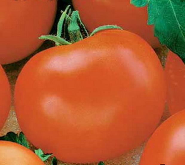 Сорт томата: Дэнди