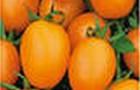 Сорт томата: Де барао оранжевый