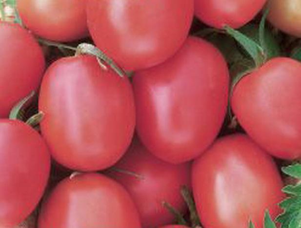 Сорт томата: Де барао розовый