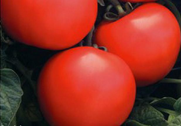 Сорт томата: Дебют   f1