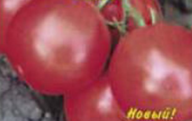 Сорт томата: Дебютантка   f1