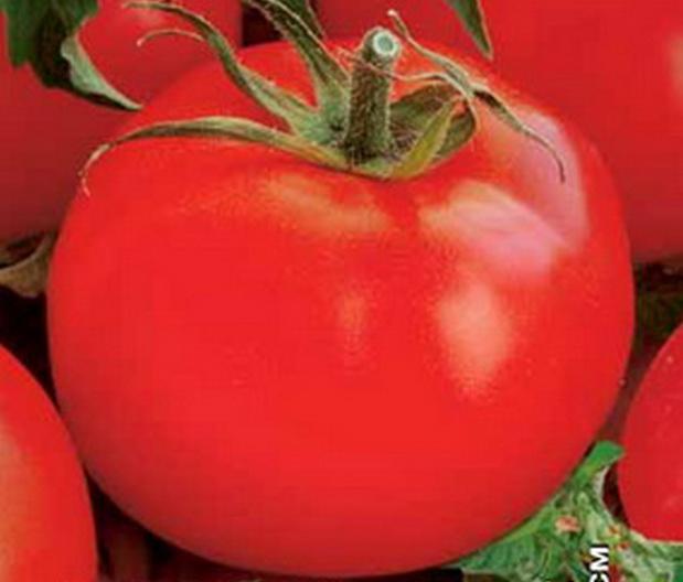 Сорт томата: Деликатес