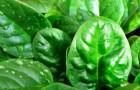 Девять суперпродуктов, которые легко вырастить на грядке