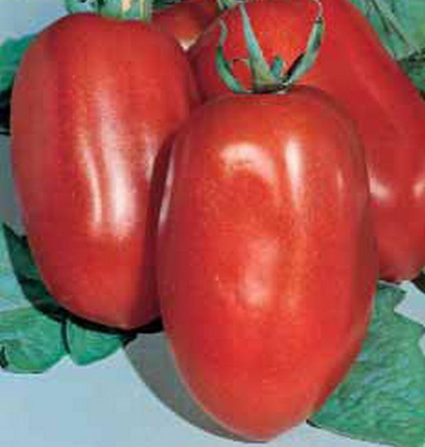 Сорт томата: Диаболик   f1