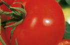 Сорт томата: Диво f1