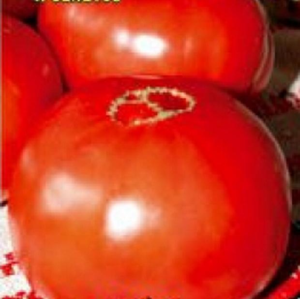 Сорт томата: Добряк