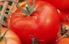 Сорт томата: Дон хосе f1
