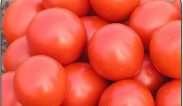 Сорт томата: Дональд   f1