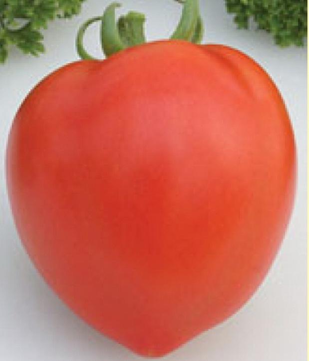Сорт томата: Донна анна   f1
