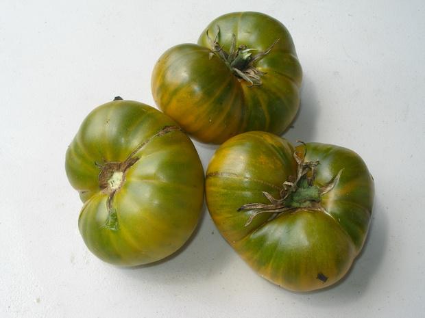 Сорт томата: Дороти   f1