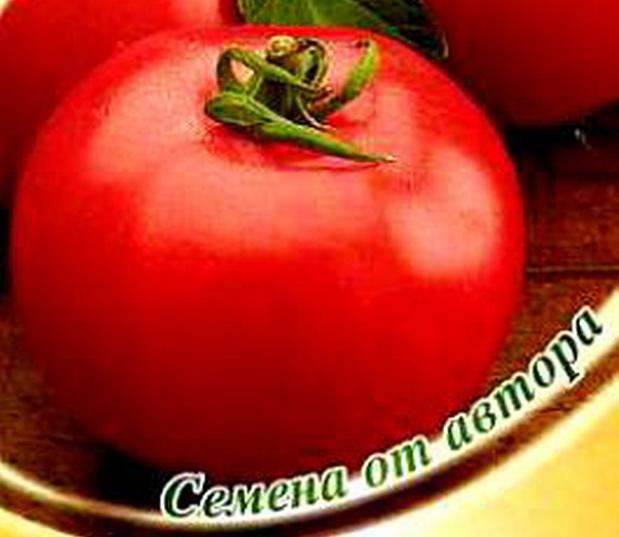 Сорт томата: Доцент   f1
