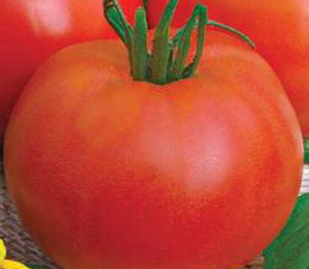 Сорт томата: Дуняша
