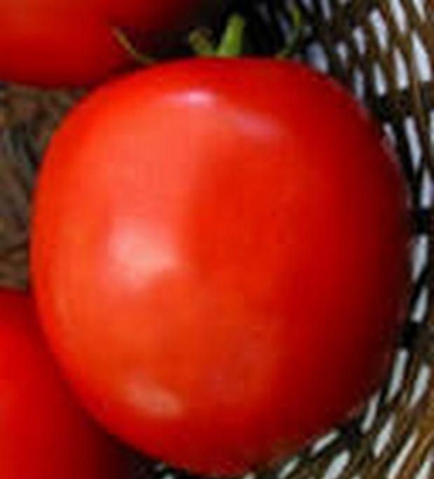 Сорт томата: Дьюти   f1