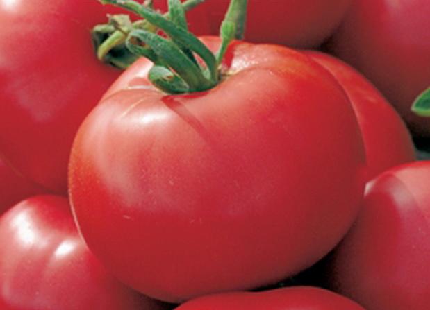 Сорт томата: Елизавета   f1