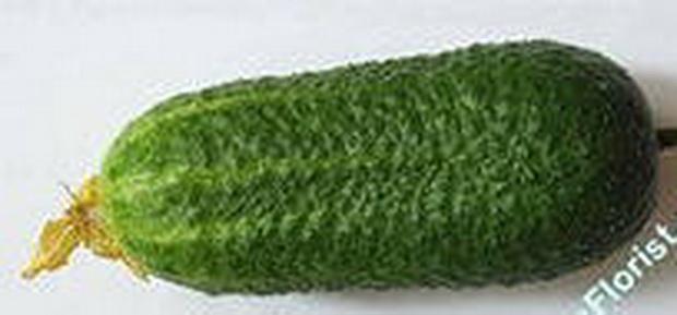 Сорт огурца: Французский размер   f1