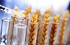 ГМ пшеница подавляет сотни генов в человеческом организме
