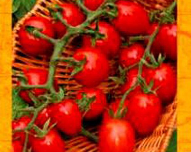 Сорт томата: Галапагос