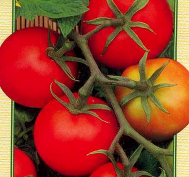 Сорт томата: Гармония   f1