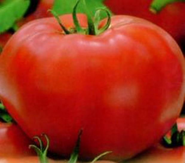 Сорт томата: Геркулес