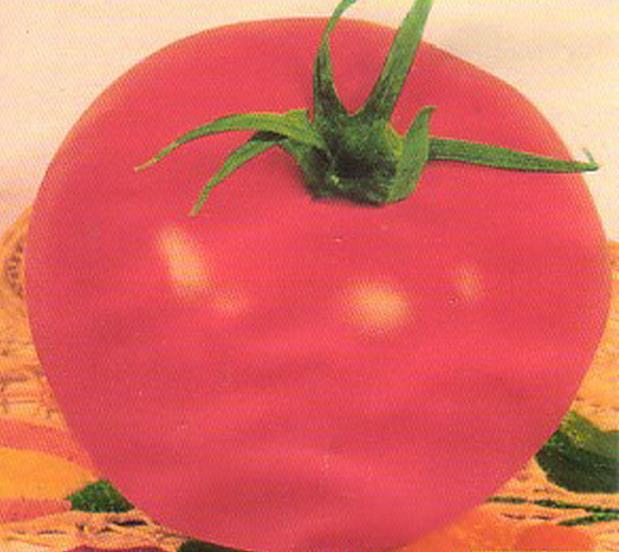 Сорт томата: Глаша