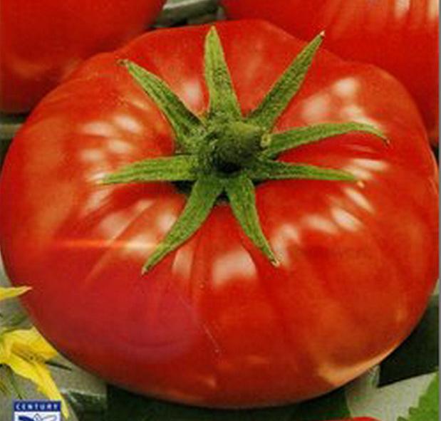 Сорт томата: Глобус   f1