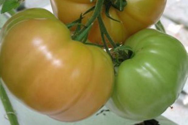 Сорт томата: Горожанка   f1