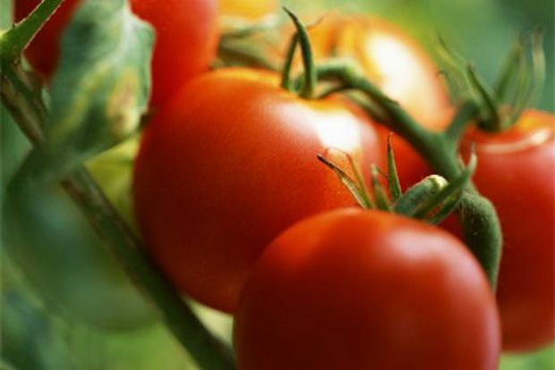 Сорт томата: Гостогай   f1