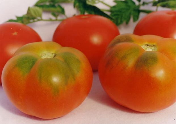 Сорт томата: Гранд