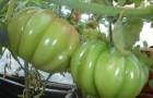 Сорт томата: Грибное лукошко