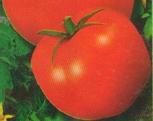 Сорт томата: Гусар