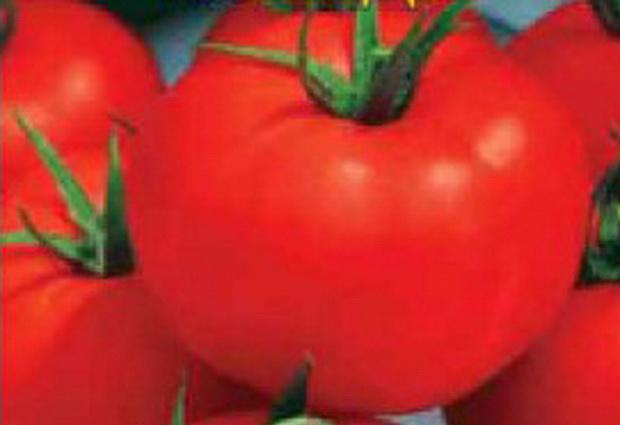 Сорт томата: Игранда