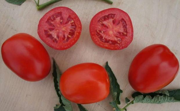 Сорт томата: Индио   f1