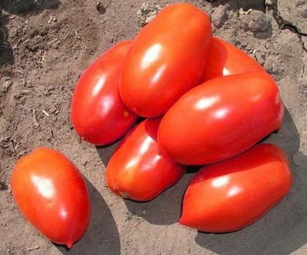 Сорт томата: Инкас   f1