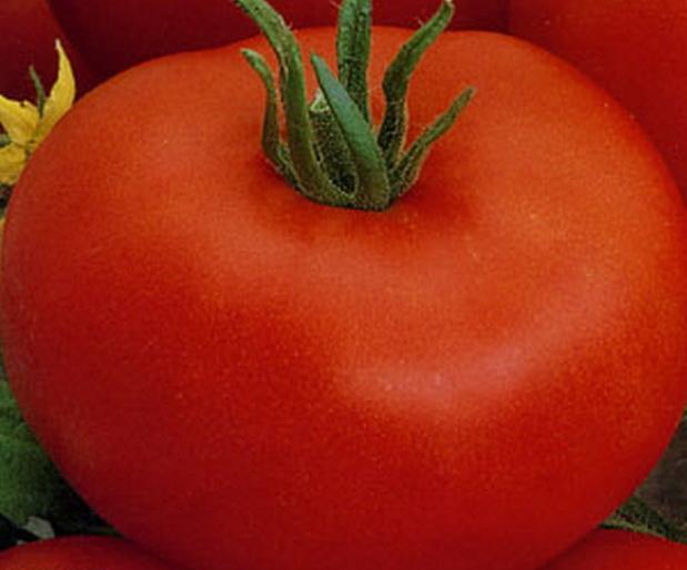 Сорт томата: Ирина   f1
