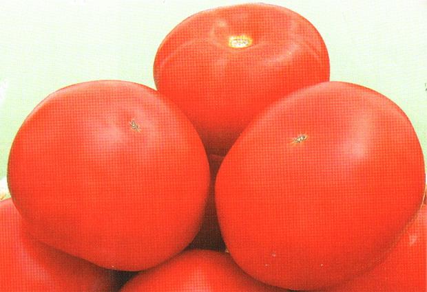 Сорт томата: Ивановец   f1