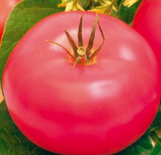 Сорт томата: Иваныч   f1