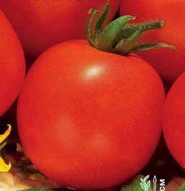 Сорт томата: Июньский