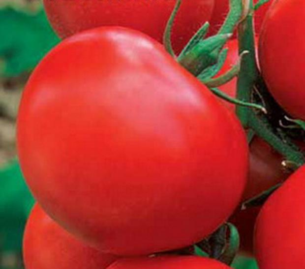 Сорт томата: Избранник