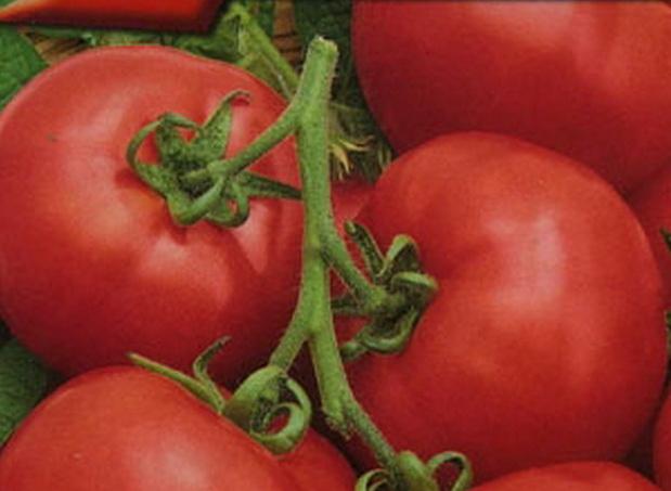 Сорт томата: Изюминка