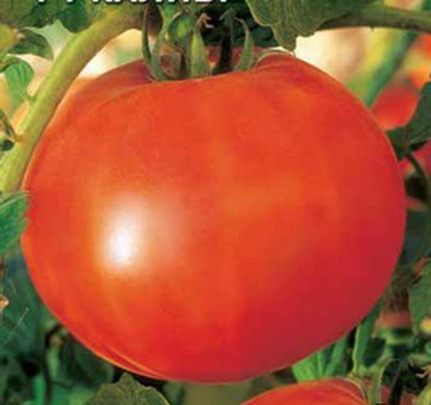 Сорт томата: Калибр   f1
