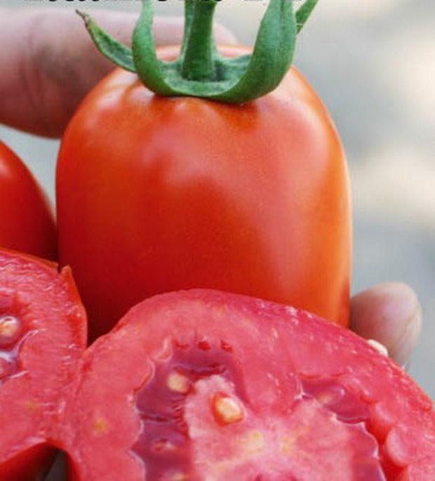 Сорт томата: Калиста   f1