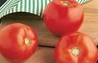 Сорт томата: Калисти f1
