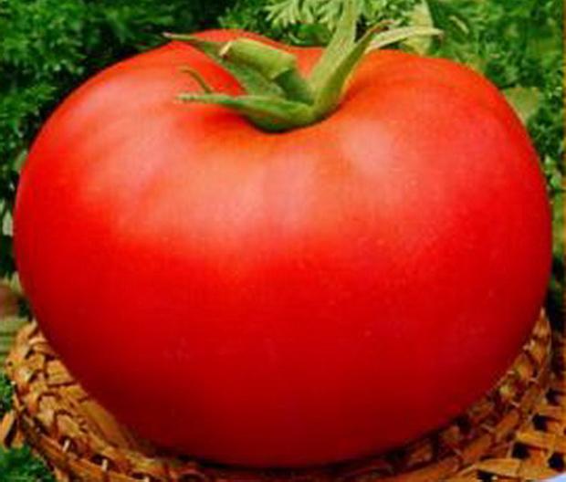 Сорт томата: Калита   f1