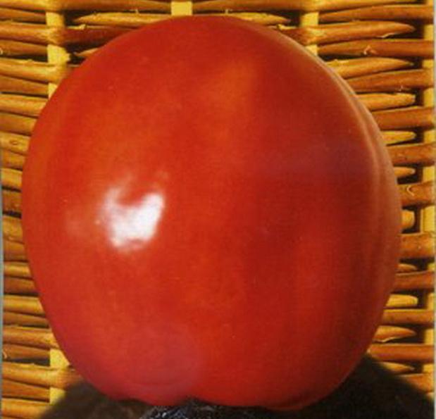Сорт томата: Канопус