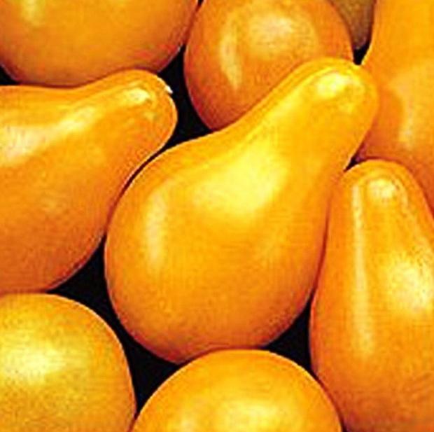 Сорт томата: Капея   f1