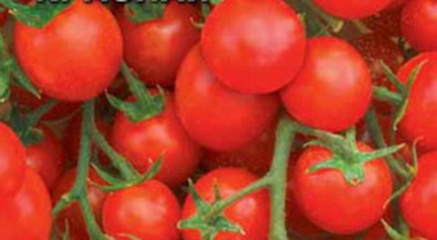 Сорт томата: Карамель красная   f1