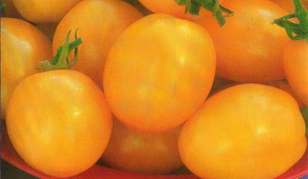 Сорт томата: Карамель желтая   f1